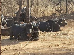 Chalet Pumba, Elephant Camp, Mabalingwe