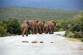 4 Day Cape to Addo Safari Tour - Return