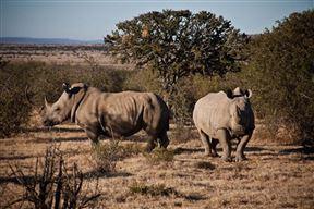 6 Day Cape to Addo Safari Tour - Return