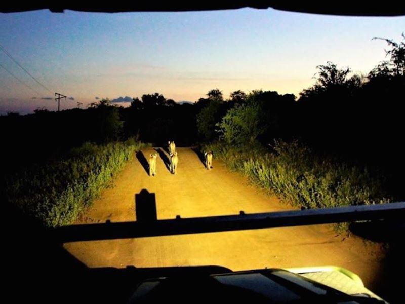 5 Night 2 pax Safari Package