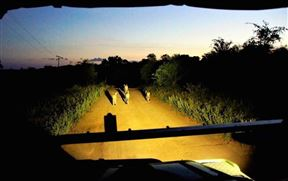 5 Night 2 pax Safari Package