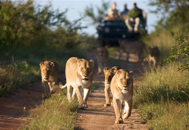 2 Night Classic Self-Drive Safari Package