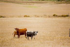 Agri Dwala Guest Farm