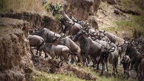 Great Migration Camps - Serengeti