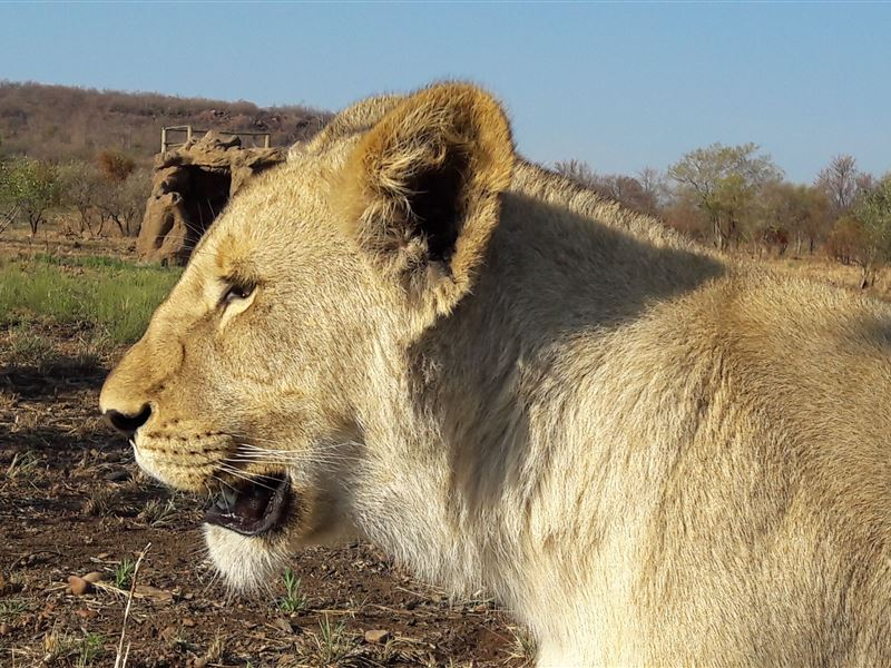pet friendly Dinokeng Game Reserve