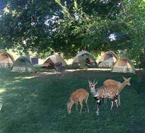 Backpacker Accommodation in South Luangwa Nat Park