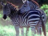Kwenga Safari Lodge, Umhlametsi Private Reserve accommodation