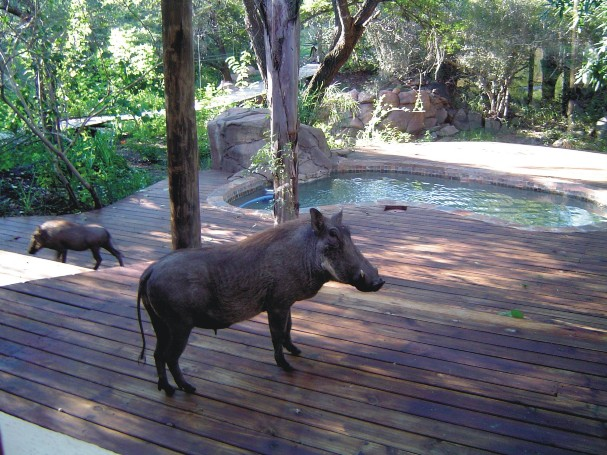 Marloth Park Reverie Safari Lodge Marloth Park Accommodation