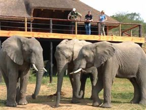 Addo Elephant Back Safaris & Lodge