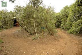 Spekboom Tented Rest Camp Addo Elephant National Park SANParks