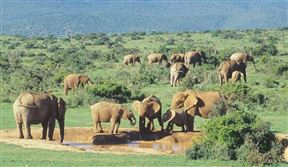 2 Nights at Addo Main Rest Camp Addo Elephant National Park SANParks