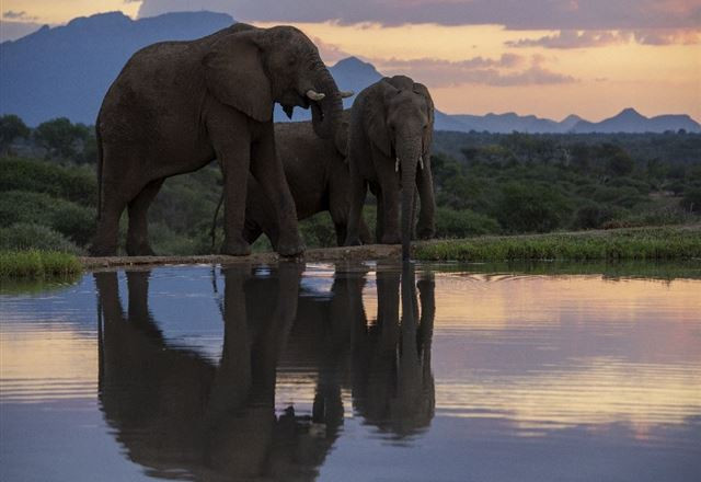 Jabulani Elephant Workshop - Hosted by Dr Johan Marais