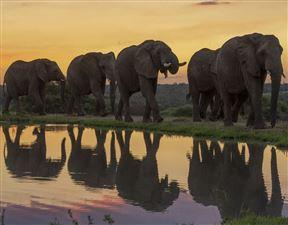 Jabulani Elephant Workshop - Hosted by Dr Johan Marais