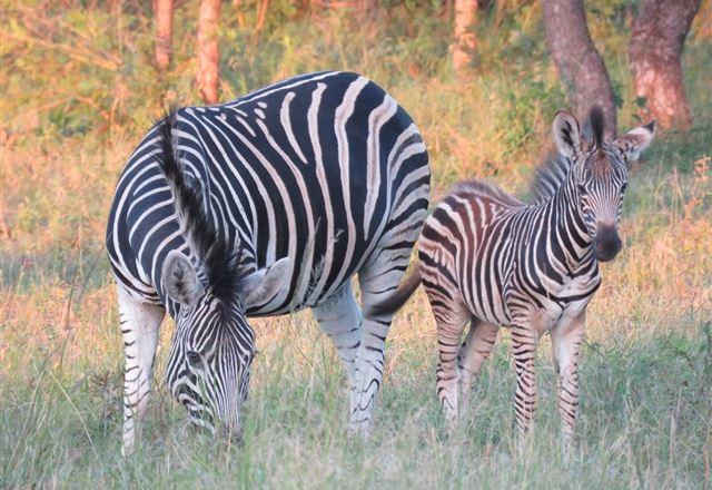 Dombeya Game Reserve, Mkhiweni Lodge