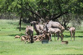 Kruger Ranch