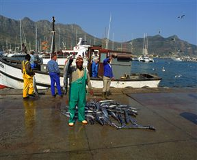 Buy Snoek Fresh From The Boats