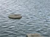 Stepping Stone 1