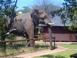 Tsakane Walking Safaris