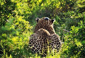 Makhasa Game Reserve & Lodge image2