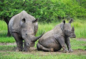 Makhasa Game Reserve & Lodge image7