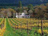 Buitenverwachting Wine Estate in Constantia