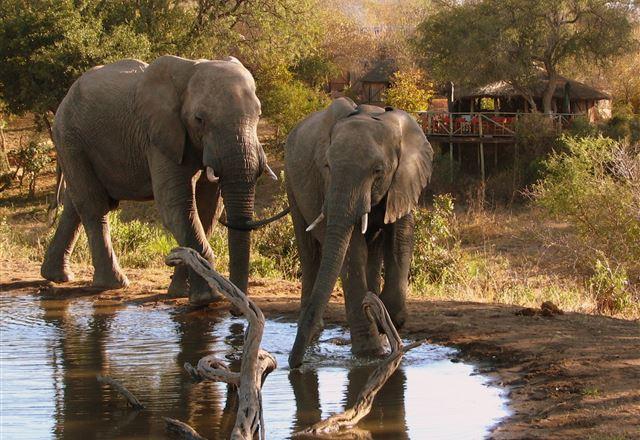 Umlani Bush Camp Timbavati Game Reserve