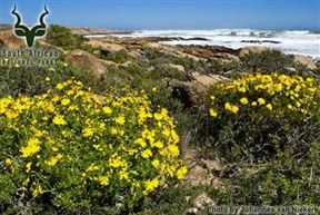 Namaqua National Park SANParks