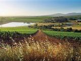 Burgherspost Wine Estate-601036