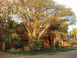 Big Tree Self-catering Guest House