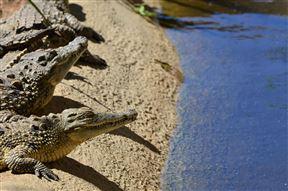Phezulu Safari Park - SPID:691724