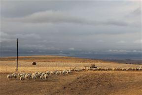 Murasie Guest Farm - SPID:693898