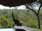 B&B717026 - Limpopo Province