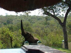 Muweti Bush Lodge Photo