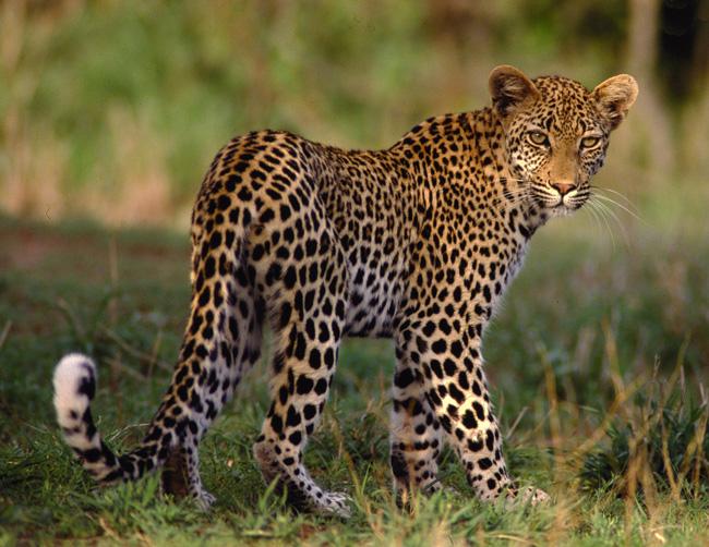http://www.safarinow.com/db/id/724944/g173876.jpg