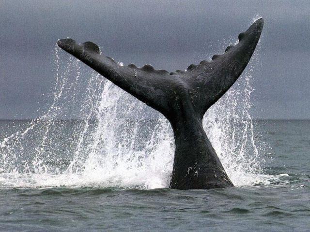 Blue Whale Resort - SPID:782571
