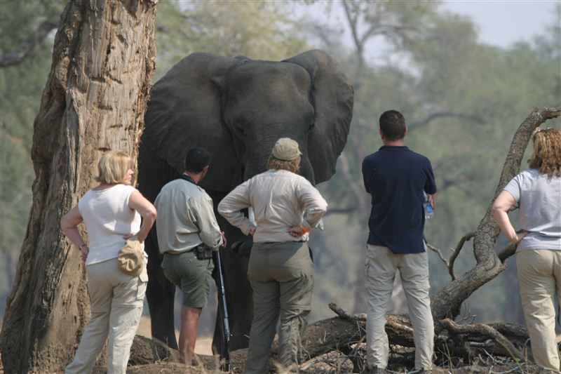Tydon Safari Camp - SPID:805395