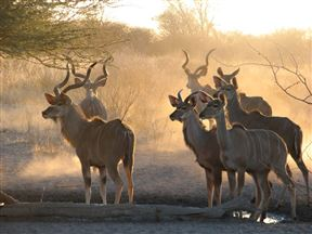 Central Kalahari Accommodation