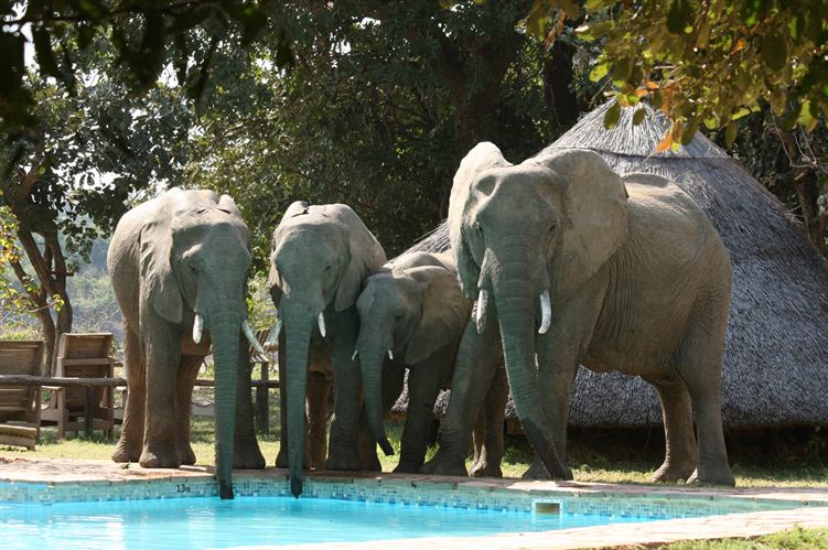 South Luangwa Nat Park Accommodation