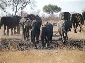 Hwange National Park Accommodation