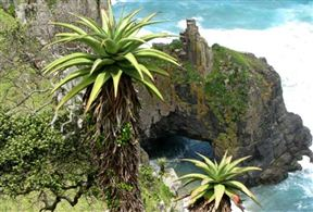 Wild Coast Accommodation
