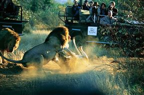 Thornybush Game Reserve Accommodation