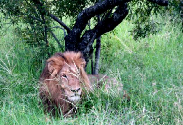 Central Kruger Park Accommodation