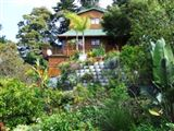 The Big Tree House