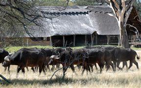 Bomani Safari Camp