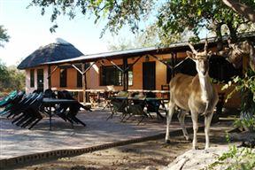 Thakadu Bush Camp image7