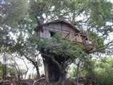 Marc's Treehouse Lodge