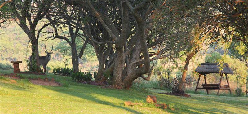 Horseback Africa - Cullinan Accommodation - WeekendGetaways