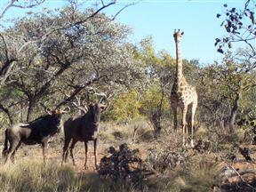Dinkweng Safari Camp Photo