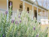 B&B899736 - Riebeek Valley