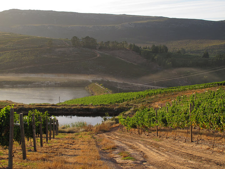 South Hill Vineyards - SPID:930286